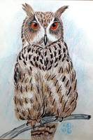 african eagle owl 1992