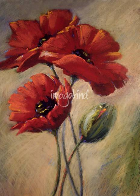 Poppies & Bud