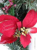 Season's Greetings Poinsettia