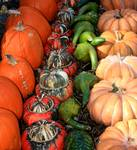 Gourds and Pumpkins 0191