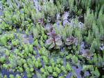 Greeny plants and pond