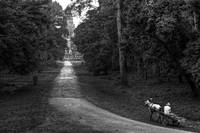 On The Road To Angkor (B&W Soft Dodge Version)
