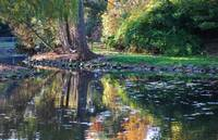 Duck Pond Reflections