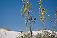 Yucca at the Monument