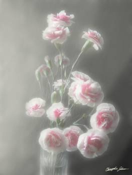 Pink Centered Carnations 1 - Ethereal Radiance by Christopher Johnson