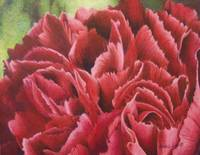 January Flower: Carnation