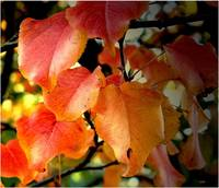 Bright colored leaves