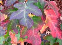 Multi-colored autumn leaves