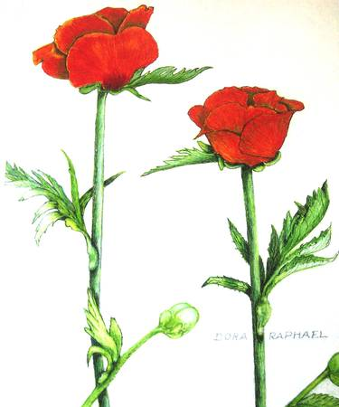 Two Red Roses by Dora Raphael