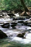 River In Great Smoky Mountains National Park, NC