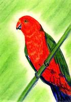 King Parrot Bird Portrait Art Print