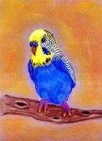 Parakeet Bird Portrait Art Print