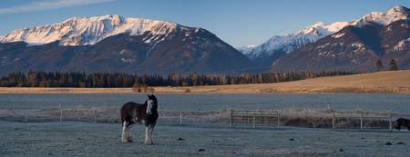 Clydsdale, Wallowa Mountains Morning