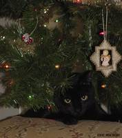Blackie's Christmas