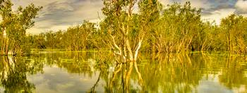 Yellow Waters At Kakadu 04 -NT