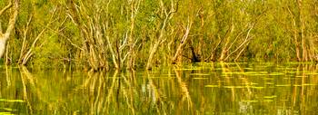 Yellow Waters At Kakadu 02 -NT