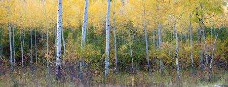 Changing Seasons, Grand Teton National Park, Wyomi