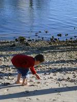 boy on beach looking at shells