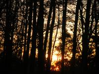 Sun Sets In The Forest