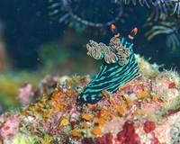 Nudi_2_Cannibal_Rock
