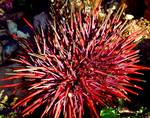 Urchin Up Close