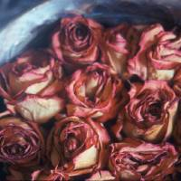 roses Art Prints & Posters by Brandon Specketer