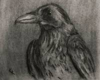 Crow Study (for So Comes Sorrow)