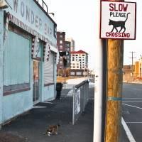 """Asbury Catwalk"" by JeffAdkins"