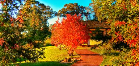 Autumn Colours At Cowra 02 - NSW
