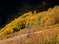Autumn-Colors-in-Colorado-3