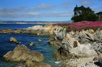 Pacific Grove Shoreline