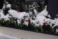 Snow amidst Christmas berries