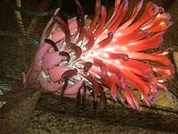 Red Bromeliad on Fire