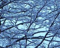 Snowy Branches Landscape