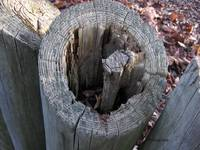 Top of Weathered Wood Fence...