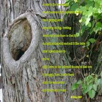 hole in tree wit poem