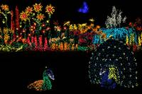 Holiday Garden Lights JSC3782