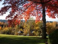 Gonzaga with Autumn Tree Canopy by Carol Groenen