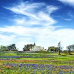 Church & Wildflowers Prints & Posters