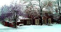 March Snow on the Redbud Tree