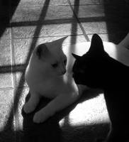 Cats in B&W