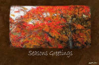 Ariana Autumn Leaves 1 Seasons Greetings