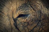 An Elephants Eye.
