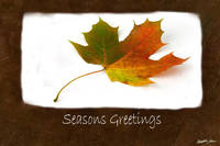 Autumn Leaves 4 Seasons Greetings