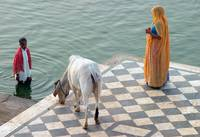 On the Ghats. Pushkar