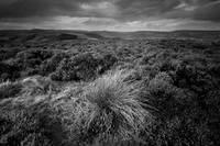 Wet Withens, Eyam Moor