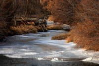Winter Gold on the Yakima River