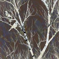 White birch & birds