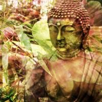Zen Buddha by Ricki Mountain