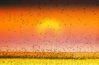 Bird Land Sunset Fine Art Photo